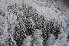 Trees under snow Stock Image