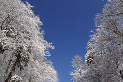 Trees under snow. Winter landscape trees under snow Royalty Free Stock Images