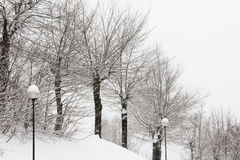 Trees under snow winter Royalty Free Stock Photos