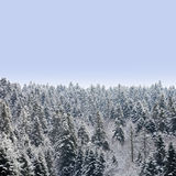 Trees under snow Royalty Free Stock Photos