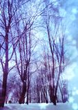 Trees under snowfall design royalty free stock images