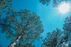 Trees Under the Sun Royalty Free Stock Photography