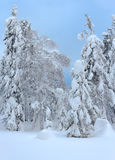 Trees under a thick layer of snow Royalty Free Stock Photo
