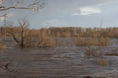 Trees under water. flood, inundation, windy sunny weather. Trees under water flood inundation windy sunny weather. spring. Siberia. Russia Stock Image