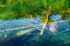 Trees under the water Stock Image
