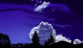 Trees Under White Clouds and Blue Sky Stock Images
