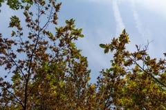 Trees Underside Contrast Sky Blue Autumn Orange Fall Season Daytime Sky Stock Photos