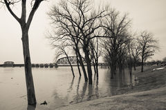Trees underwater from flood Stock Photo