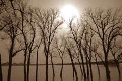 Trees underwater from flood Stock Image
