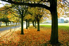 Trees university. View of the beautiful autumn trees Royalty Free Stock Image