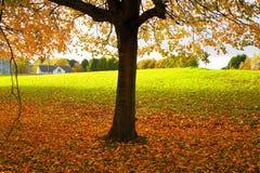 Trees university. View of the beautiful autumn trees Royalty Free Stock Photos