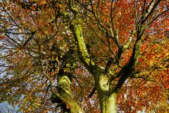 Trees university. View of the beautiful autumn trees Royalty Free Stock Images