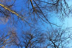 Trees up to the sky Royalty Free Stock Photo