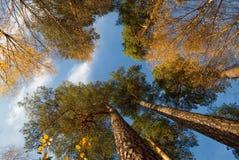 Trees, upward angle. Stock Images