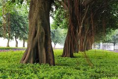 Trees on urban street Stock Photo