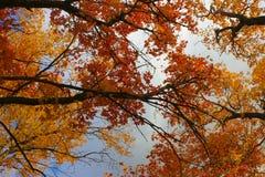 trees utah för sky för kanjonneff s Royaltyfria Bilder