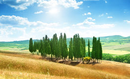 Trees in Val d'Orcia Royalty Free Stock Photography