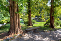 Trees in valentino Park. Stock Image