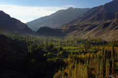 Trees valley. Kashmir valley in the area of Garghil, India Royalty Free Stock Image