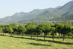 Trees in valley of river Ara, pyrenees Stock Images