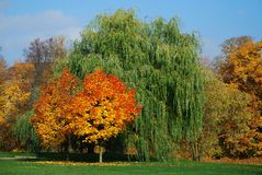 Colours of fall. Trees with various colours of autumn leaves royalty free stock photo