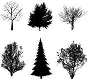 Trees vector Stock Photo
