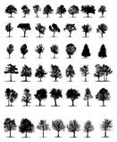 Trees (vector) Stock Images