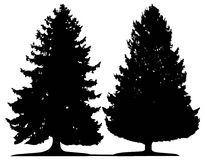 Trees (vector) Stock Photography
