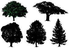 Trees - vector set Stock Photos