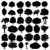 Trees vector on white background Royalty Free Stock Photography
