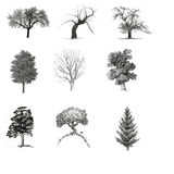 Trees. Vectoral set ,isolated file Royalty Free Stock Photography