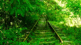Trees and vegetation on abandoned rail train stock video footage