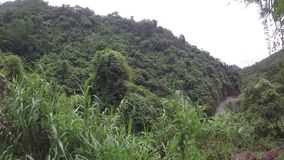 Trees and vegetation along narrow winding rugged in mountainous Province on misty day. Mayaoyao, Ifugao, Philippines - August 27, 2018: Trees and vegetation stock video footage