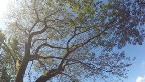 Trees and vegetation on mountain lake shore. rotating underside view. Sampaloc Lake, San Pablo City, Laguna, Philippines - February 20, 2018: Trees and stock video footage