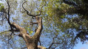 Trees and vegetation on mountain lake shore. rotating underside view. Sampaloc Lake, San Pablo City, Laguna, Philippines - February 20, 2018: Trees and stock footage