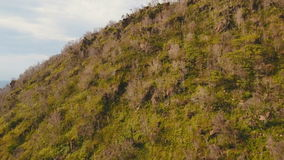 Trees and vegetation on the mountainside. Camiguin island Philippines. Rainforest covered with green vegetation and trees in the mountains on the tropical stock video
