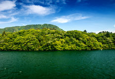 Trees and vegetation over Lake Ashi in Hakone, japan.  Stock Images