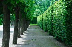Trees and vegetative fences in a classical garden Stock Photography
