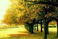 Trees. View of the beautiful autumn trees Royalty Free Stock Photo