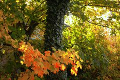 Trees. View of the beautiful autumn trees Royalty Free Stock Images