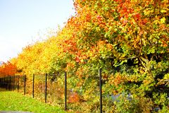 Trees. View of the beautiful autumn trees Stock Photos