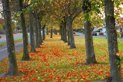 Trees. View of the beautiful autumn trees Royalty Free Stock Photography