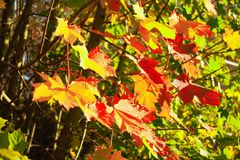 Trees. View of the beautiful autumn trees Stock Photography