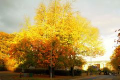 Trees. View of the beautiful autumn trees Stock Image