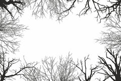 Trees view from below Stock Image