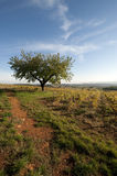 Trees and vines, France. Trees and vines, fall, Anthon, France Royalty Free Stock Photos