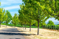 Trees and Vineyards Royalty Free Stock Photo