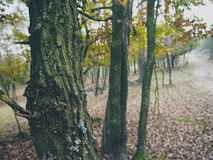 Trees in vintage style. December in the forest - trees, leaves and paths Royalty Free Stock Image