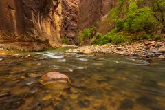 Trees in the Virgin Narrows River in Zion National Park. royalty free stock photo
