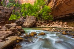 Trees in the Virgin Narrows River in Zion National Park. Stock Photos